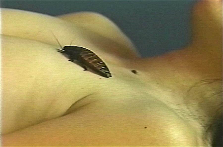 Miya Masaoka & Cockroach