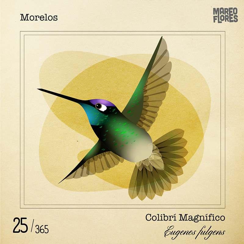 25-Morelos