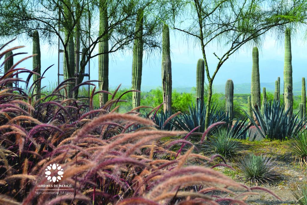 jardindecactaceas4