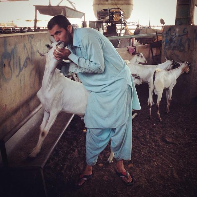 mercado de ganado
