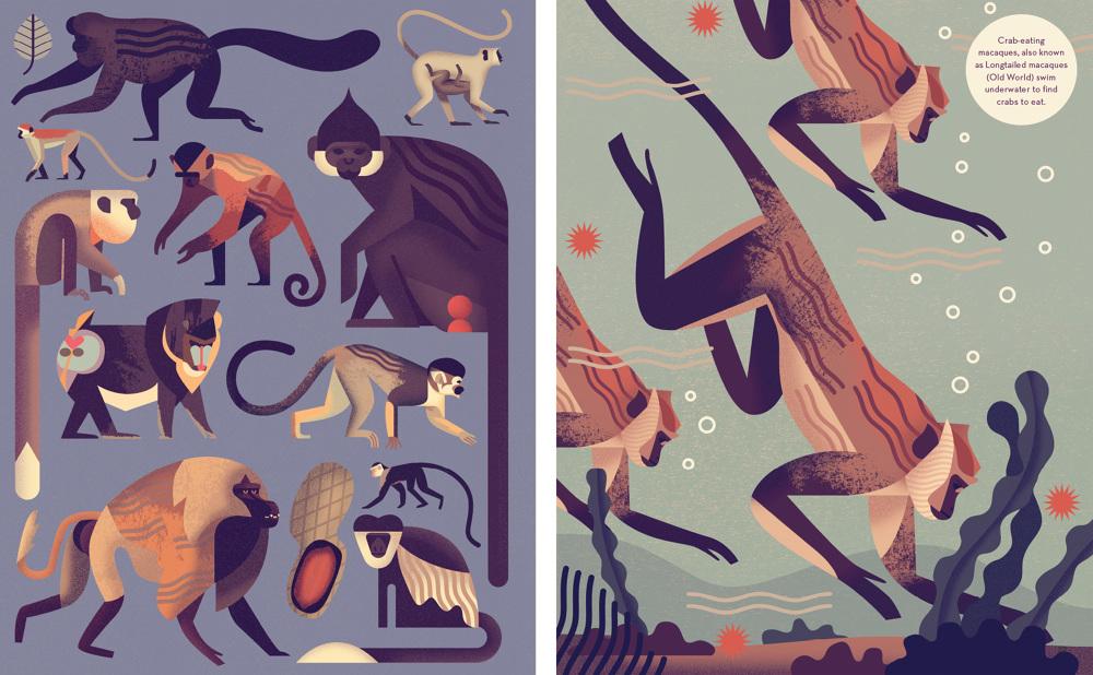 Mad-About-Monkeys-Owen-Davey-Illustration-Combo_1000 (1)