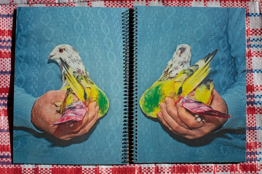 Paloma al aire, de Ricardo Cases