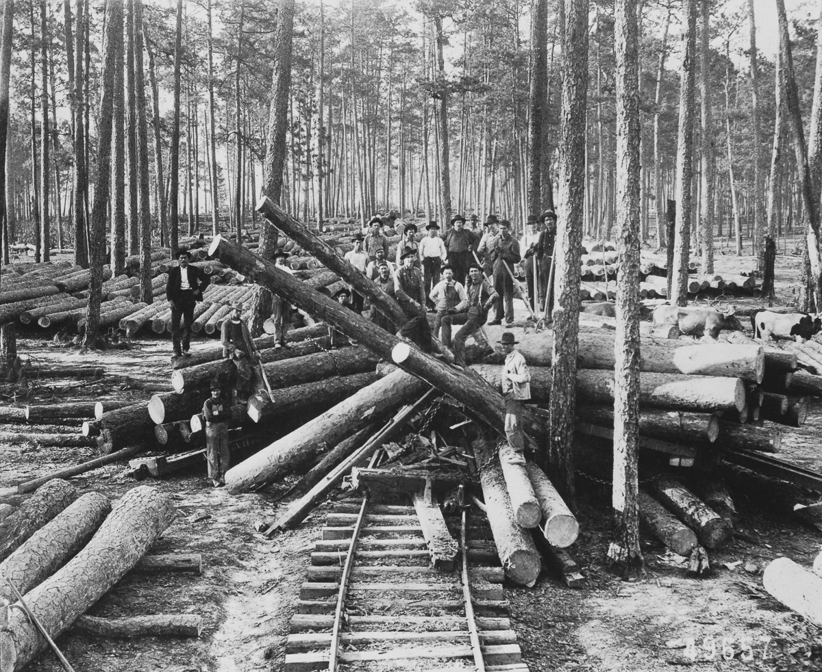 Logging Crew Standing on Cut Logs