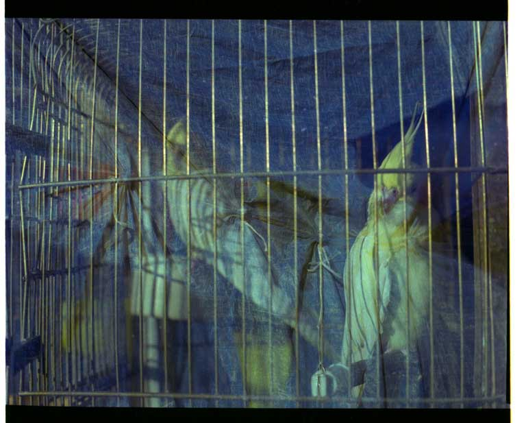 Paola Bragado Pájaros enjaulados Fotografía. Exposición 'Animalista, Representación, violencias y respuestas'