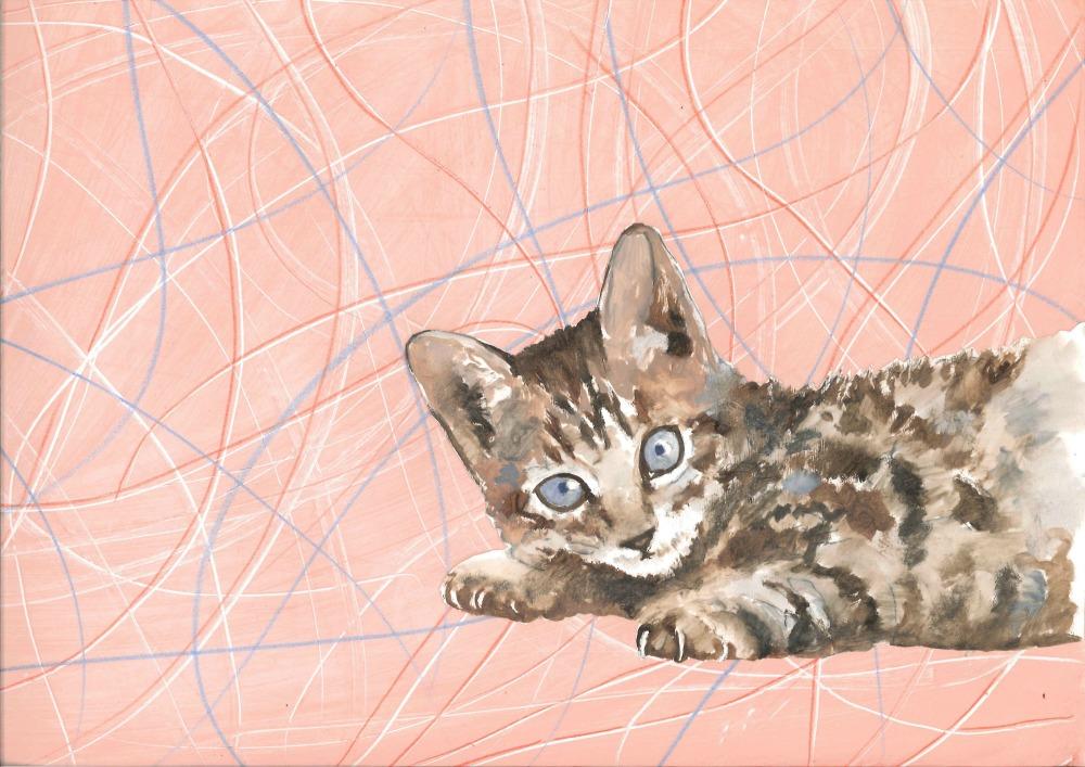 gato-3