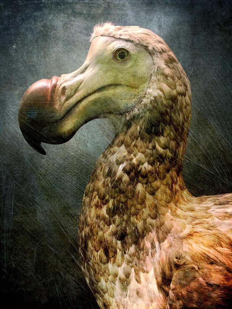 historia natural sergio parra