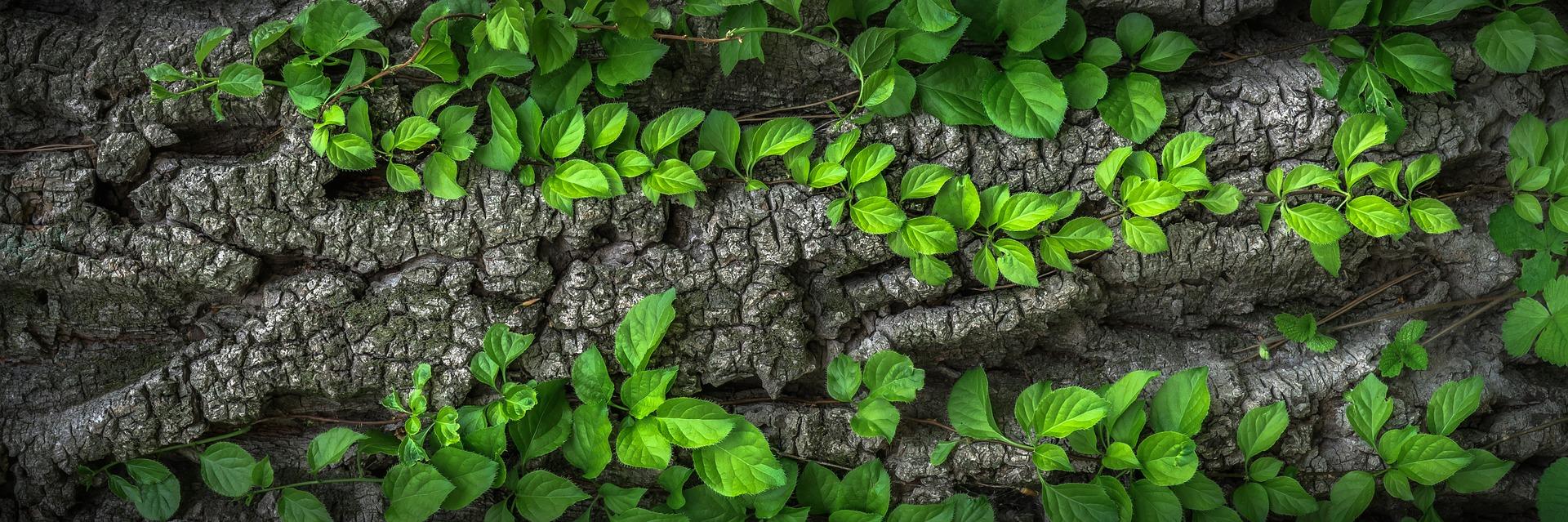 wood-1350175_1920