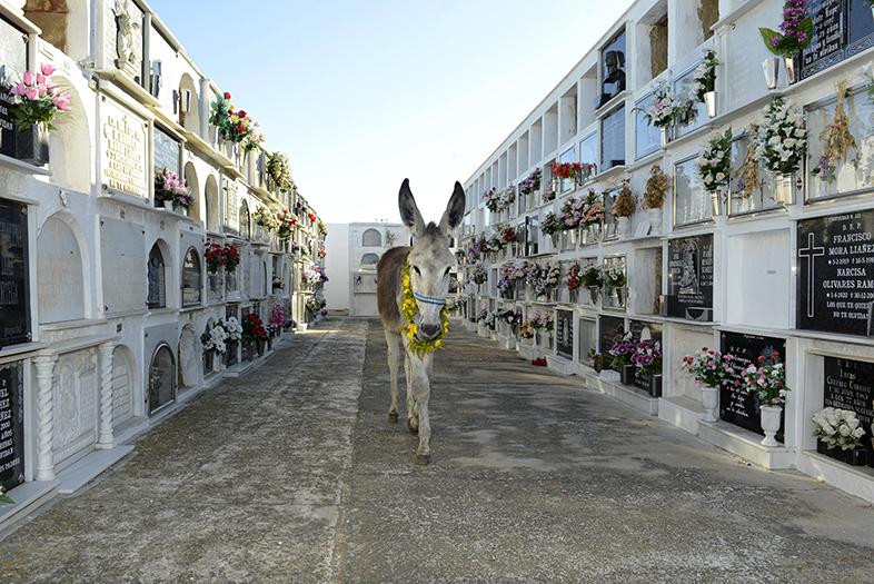 Platerilla en el cementerio de Moguer. Imagen publicada en 'Hermano asno'