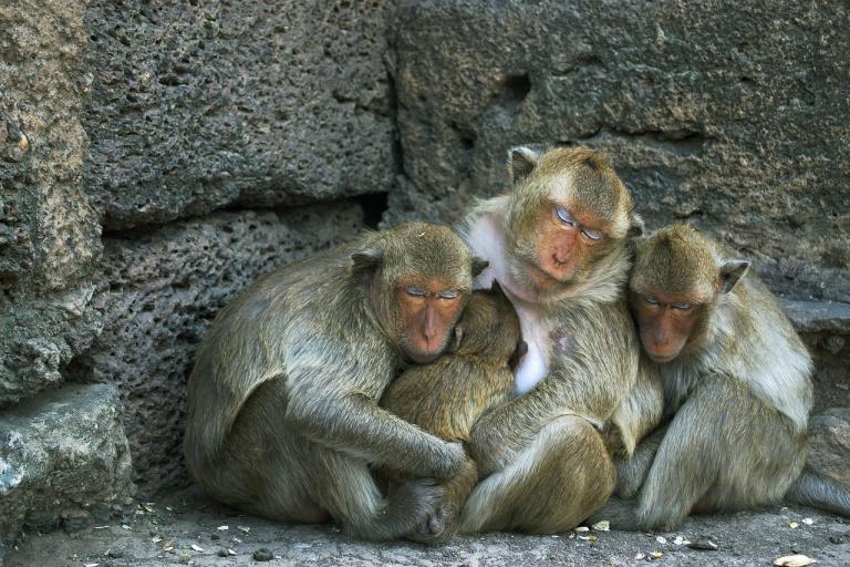 macaque-hug