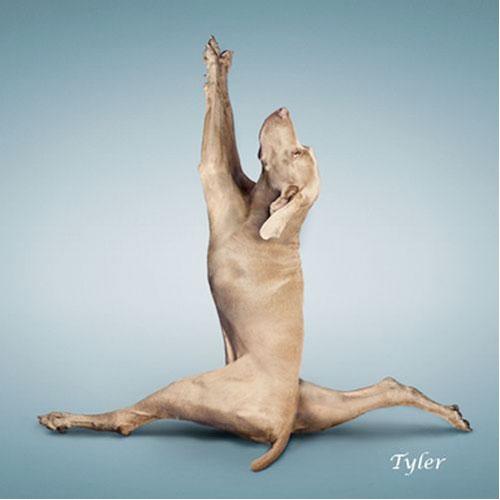 perros haciendo yoga