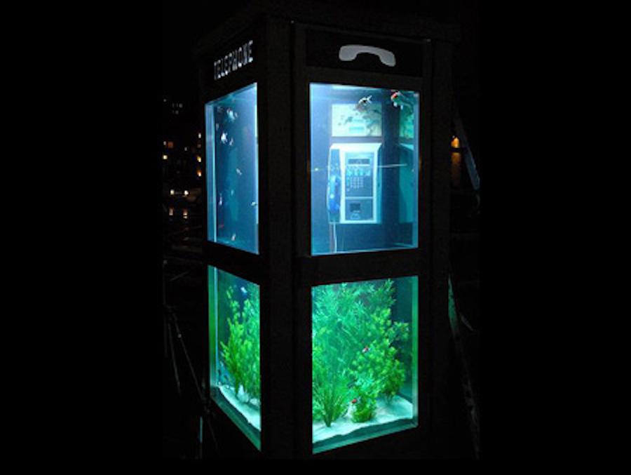 aquariumpb05
