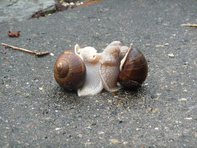 escargots-243303_640
