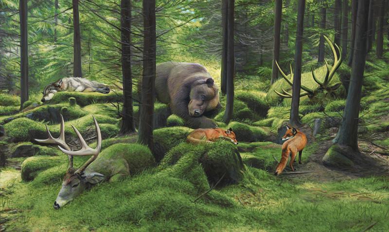 Sleeping woods-4