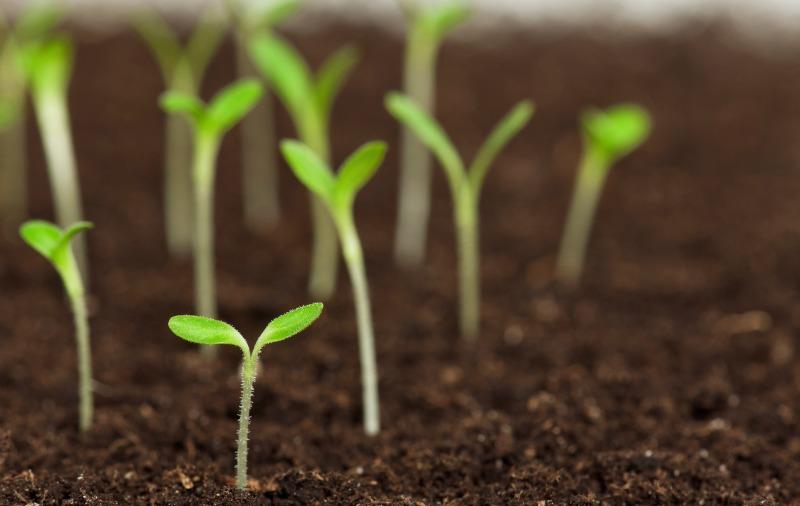 plantas-na-terra-Vida-Rural