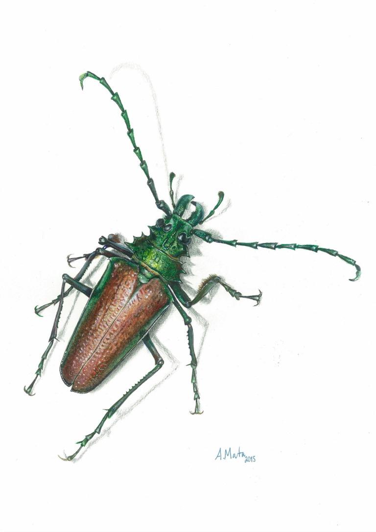 Psalidognathus friendii (Coleoptera, Cerambycidae, Prioninae) - Astolfo Mata Betancourt