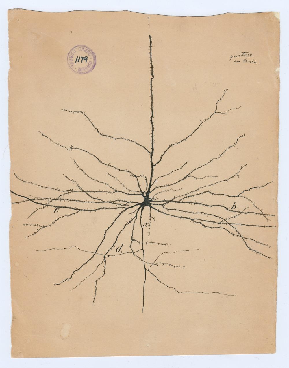 beautiful-brain-publicity_01_pyramdial-neuron