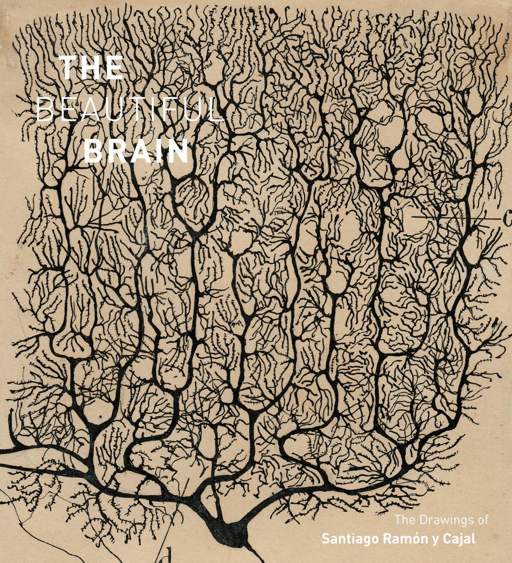 the-beautiful-brain-cover