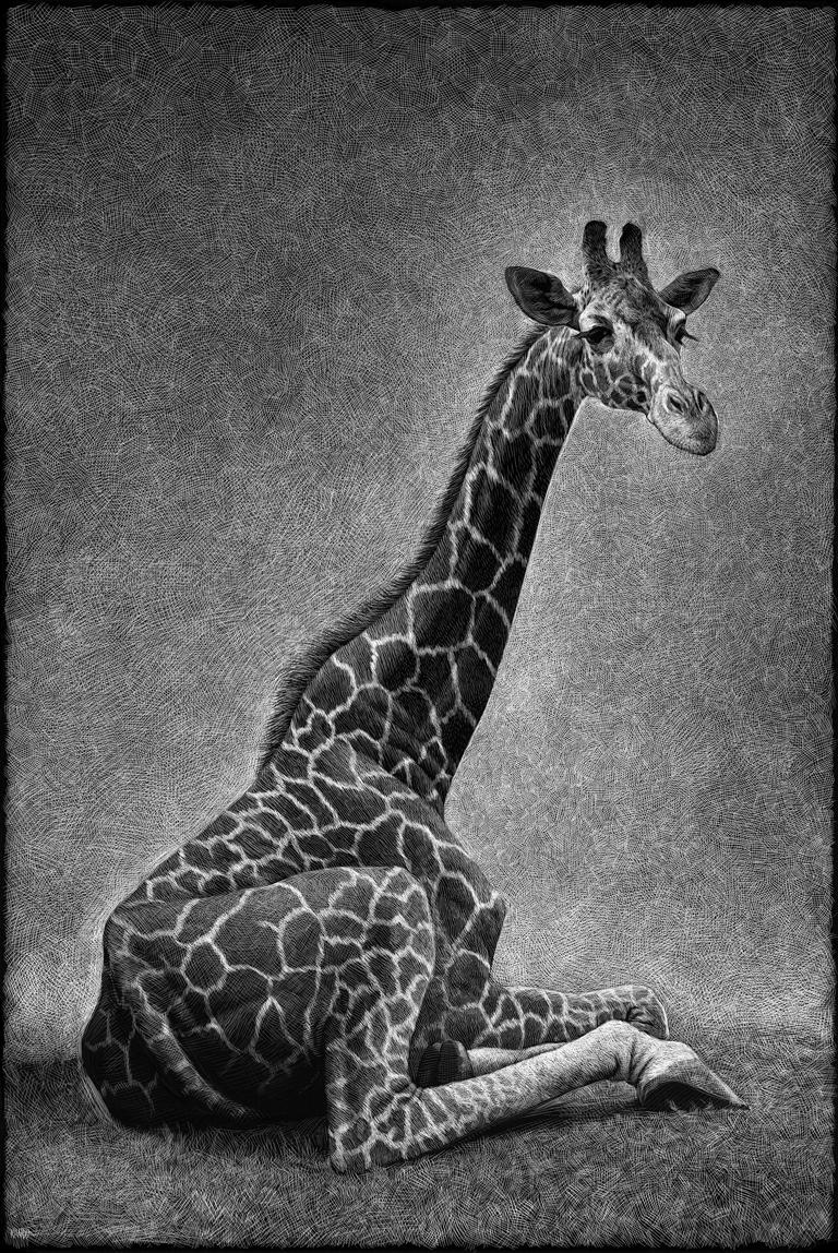 ricardo martinez giraffe-copia
