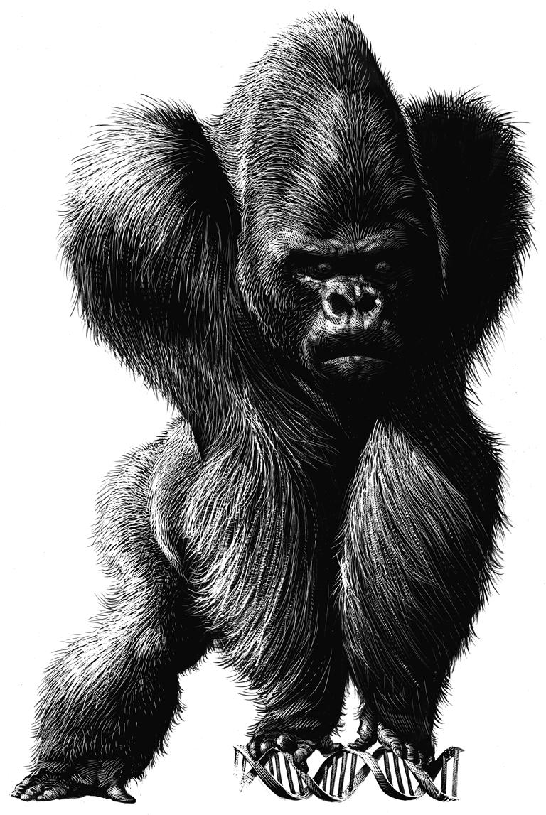 ricardo martinez gorila-genoma-color-copia