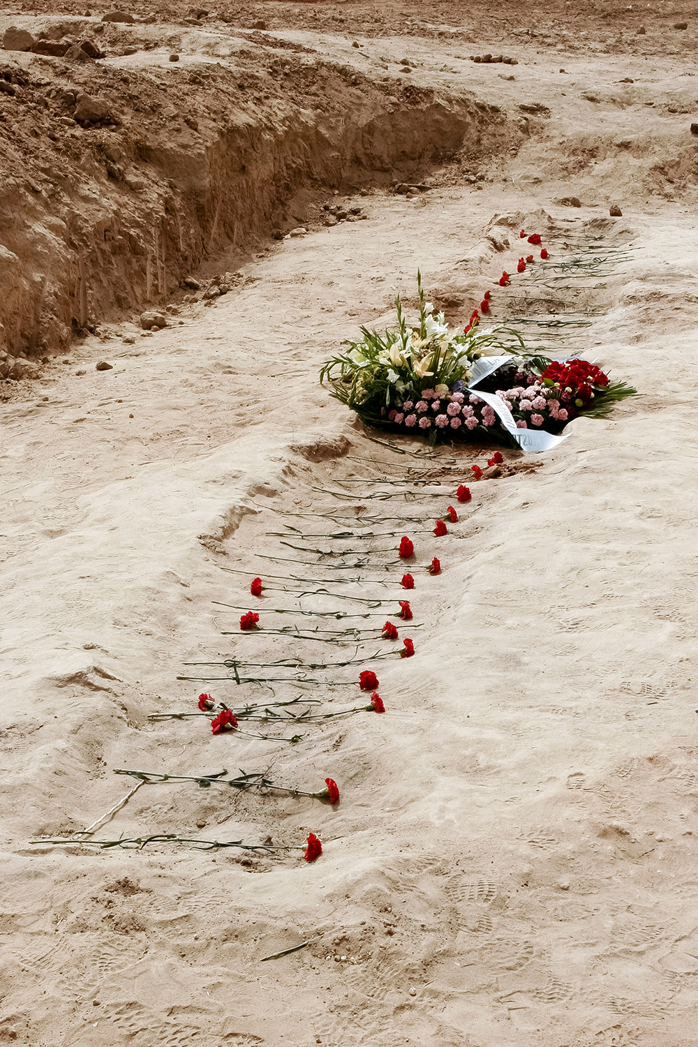 Flowers in the trench.