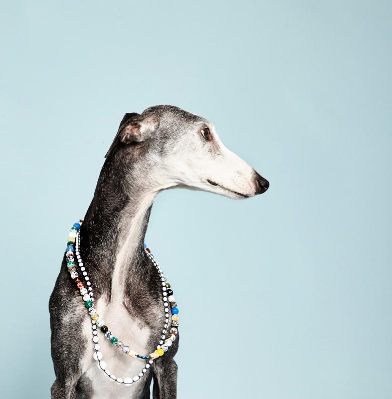 galgo fotografiado en el proyecto las muy perras