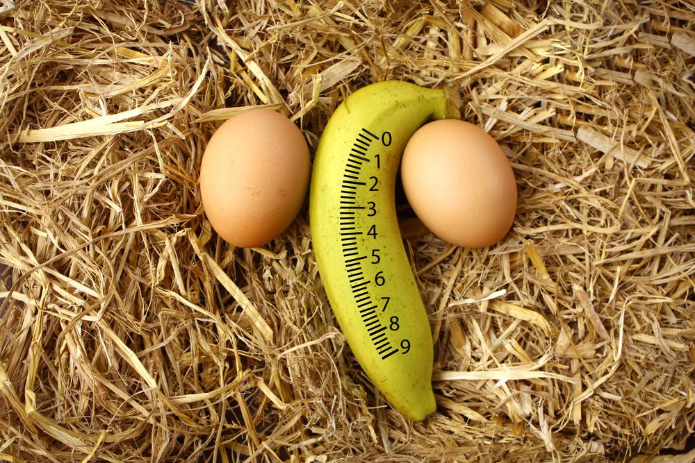 comparación de circunferencia de la polla
