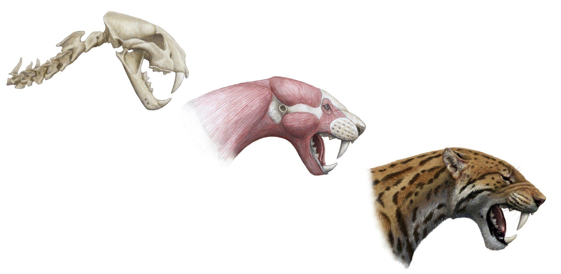 Paleoartista