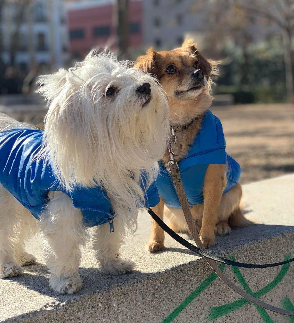 hijos perros