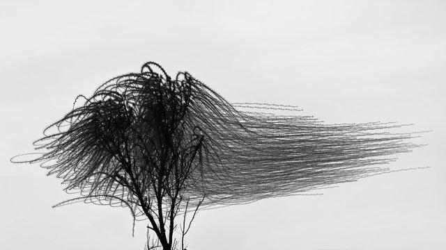 'Ornitografías', hacer visible lo invisible