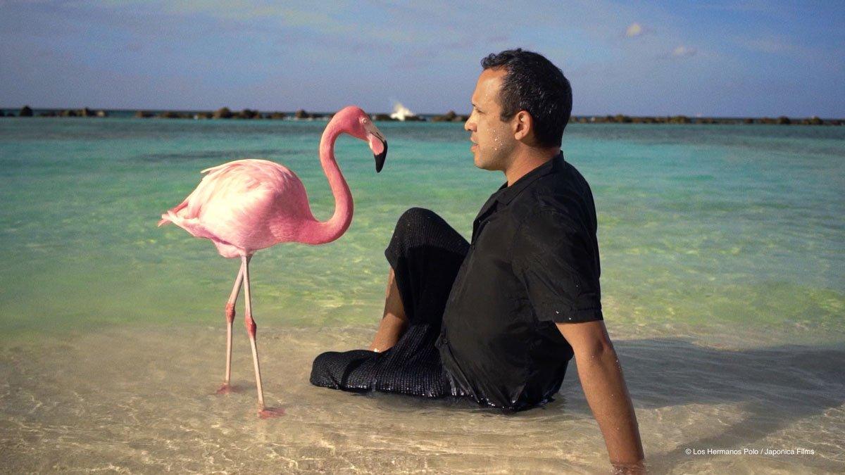 'The Mystery of Pink Flamingo', un viaje hacia la libertad de ser uno mismo para poder crear